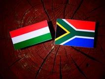 Ungersk flagga med söder - afrikansk flagga på en isolerad trädstubbe Arkivbild