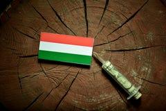 Ungersk flagga på en stubbe med injektionssprutan som injicerar pengar Arkivfoton