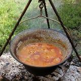Ungersk stew Arkivbild