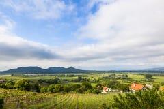 Ungersk vingård royaltyfria foton