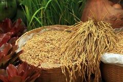 Ungeschälter Reis des thailändischen Jasminreises im Korb stockfoto