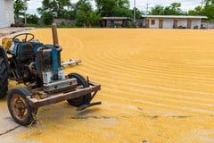 Ungeschälter Reis mit Traktor Lizenzfreie Stockfotografie