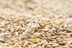 Ungeschälter Reis, ungeschälter Reis hat, nicht heraus zu schälen Lizenzfreie Stockfotos