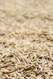 Ungeschälter Reis, ungeschälter Reis hat, nicht heraus zu schälen Lizenzfreie Stockbilder