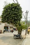 Ungewöhnlicher Baum in der Straße stockfoto