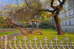 Ungewöhnlich Kurven von Bäumen Stockfotos