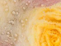 Ungewöhnliche Abstraktion mit einer gelben Rose Stockfotos