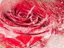 Ungewöhnliche Abstraktion mit Rotrose Stockbild