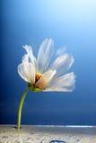 Ungewöhnliche Blume Lizenzfreie Stockfotos