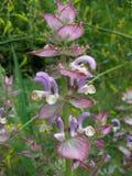 Ungewöhnliche Blumen Lizenzfreies Stockfoto