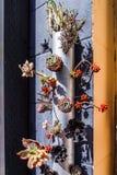 Ungewöhnliche Blumenzusammensetzung Lizenzfreie Stockfotos
