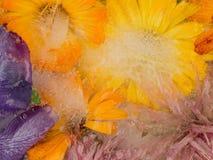 Ungewöhnliche eisige Abstraktion von Blumen Lizenzfreies Stockbild