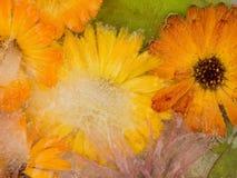 Ungewöhnliche eisige Abstraktion von Ringelblumenblumen Lizenzfreie Stockfotografie