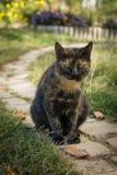 Ungewöhnliche Farbe Cat Sitting auf der Straße stockbilder