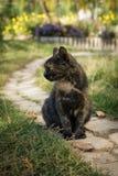 Ungewöhnliche Farbe Cat Sitting auf der Straße Lizenzfreies Stockfoto