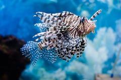 Ungewöhnliche Fische stockfotos