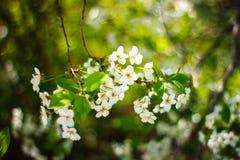 ungewöhnliche Frühlingsblumen lizenzfreies stockfoto