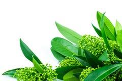 Ungewöhnliche Grünpflanze auf einem weißen lokalisierten Hintergrund lizenzfreie stockfotografie