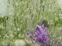 Ungewöhnliche, organische grüne und lila Abstraktion Lizenzfreies Stockfoto