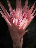 Ungewöhnliche rosafarbene Blume Stockbild