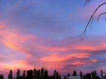 Ungew?hnliche rote Himmel-Landschaft u. B?ume lizenzfreie stockbilder