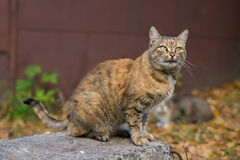 Ungewöhnliche rote Katze lizenzfreie stockfotos