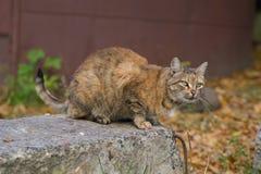 Ungewöhnliche rote Katze von einem Schutz von Donetsk stockfotografie