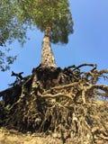 Ungewöhnlicher Baum stockfotografie