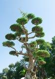 Ungewöhnlicher tropischer üppiger Baum Lizenzfreies Stockfoto