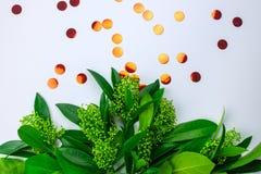 Ungew?hnliche Gr?npflanze auf einem wei?en lokalisierten Hintergrund stockfotos
