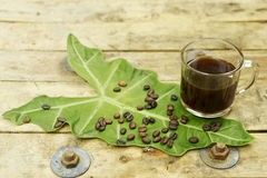 Ungiftiger schwarzer Kaffee und Kaffeebohne auf Elefanten Lizenzfreies Stockfoto