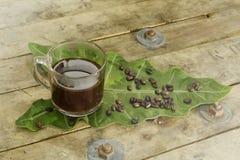 Ungiftiger schwarzer Kaffee und Kaffeebohne auf Elefantenohr treiben Blätter Stockfotografie