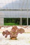 Ungiftiges Gemüse lizenzfreies stockfoto