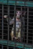 Unglückliche Affe behid Stangen Stockfoto