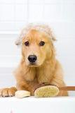 Unglücklicher Hund zur Badzeit Stockfotos