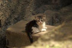 Unglückliches obdachloses Kätzchen Stockfoto