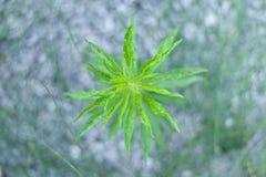 Unglaubliche Natur-Grün-Wasserpflanzen, die nah auf Steine t wachsen Lizenzfreies Stockfoto