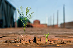 Unglaubliche Natur-Grünpflanzen, die auf einem hölzernen Güterzug wachsen Lizenzfreie Stockfotografie