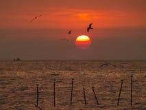 Unglaublicher Sonnenaufgang mit Abstufung von rote Farbhimmel- und -fliegenseemöwen Lizenzfreie Stockbilder