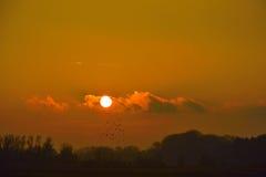 Unglaublicher Sonnenuntergang und Menge von Krähen Stockfotos