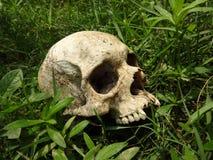 Ungraved skalle Royaltyfria Bilder