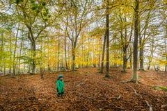 Ungt barn med vinterkläder i en härlig färgrik och gul skog för höstbokträdblad arkivbild