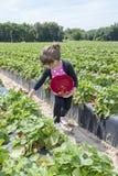 Ungt barnplockningjordgubbar Fotografering för Bildbyråer
