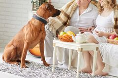 Ungt gift par med deras husdjur som sitter i morgonen i en hemtrevlig vardagsrum royaltyfria foton