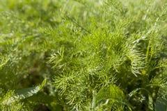 Ungt grönt gräs som växer på ängen Royaltyfria Foton