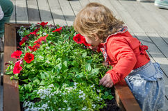 Ungt härligt flickabarn, barn som spelar i gatan av den forntida staden nära blomsterrabatterna med röda blommor som är glat och  Arkivbild
