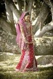 Ungt härligt indiskt hinduiskt brudanseende under träd Royaltyfri Bild