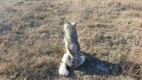 Ungt hundsammanträde Royaltyfri Fotografi
