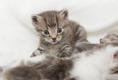Ungt kattbarn royaltyfri fotografi