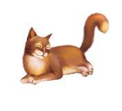 Ungt rött brunt lägga för katt Isolerat på vit Arkivfoto